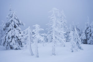 icebounded trees at the Brocken (mountain), Harz, Schierke, Germany