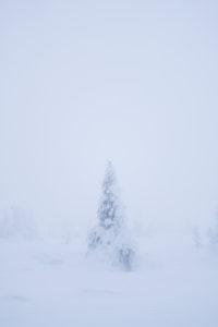 Tree sculpture in winter, Brocken (mountain), Harz, Schierke, Germany