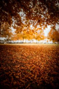 Herbstliche Stimmung durch Braune Blätter auf dem Boden im Wald an einer Lichtung