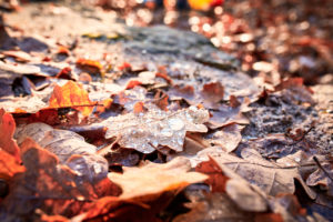 Drops of water on brown oak leaves, autumn mood