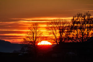 Sunset with orange sky and black trees in the foreground