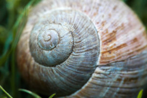 Macro shot of a snail shell
