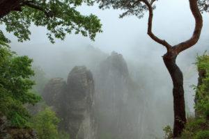 Fog in the National Park Saxon Switzerland, Bastei area, Saxony, Germany, Europe