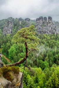 National Park Saxon Switzerland, Bastei area, Saxony, Germany, Europe