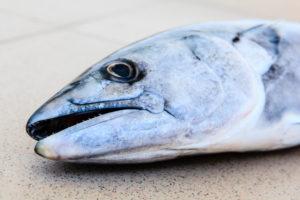 Tuna from the Black Sea, Bulgaria