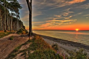 Germany, Nienhagen, coast, ghost forest, Baltic Sea, sunset
