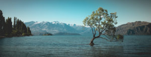New Zealand, South Island, South Island, Otago, Wanaka, Lake Wanaka Tree