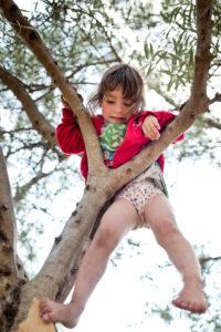 3-6 jähriges Mädchen mit roter Jacke klettert barfuß auf Olivenbaum