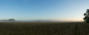 Panoramic picture of grain field in the morning haze