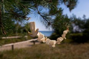zum Trocknen an einem Nadelbaum aufgehängte Pilze