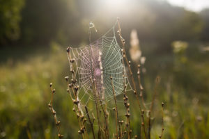 Spiderweb with dewdrops in the morning light on a meadow