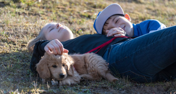 Two children happily lie on a meadow with their Mini Goldendoodle, a mixture of golden retriever and toy poodle.