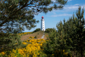 Germany, Mecklenburg-West Pomerania, Hiddensee, yellow gorse blooms in front of the island's northern lighthouse.