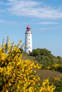 Deutschland, Mecklenburg-Vorpommern, Hiddensee, gelber Ginster blüht vor dem nördlichen Leuchtturm der Insel.