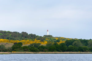 Hiddensee, lighthouse, yellow gorse