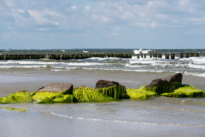 Breakwater, groynes, kelp, Baltic Sea