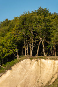 Germany, Mecklenburg-Western Pomerania, Sassnitz, chalk cliffs, Wissower Klinken, trees stand on the precipice, Jasmund National Park, Unesco World Heritage Site, Baltic Sea