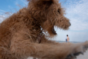 Deutschland, Mecklenburg-Vorpommern, Insel Rügen, Ostseebad Binz, ein Hund mit aufgerissener Schnauze, ein Badegast am Strand der Ostsee.