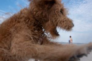Germany, Mecklenburg-Western Pomerania, Ruegen island, Ostseebad Binz, a dog with a torn snout, a bather on the beach of the Baltic Sea.