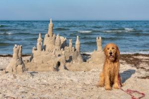 Deutschland, Mecklenburg-Vorpommern, Insel Rügen, Ostseebad Binz, ein Hund bewacht an der Ostsee eine Sandburg.