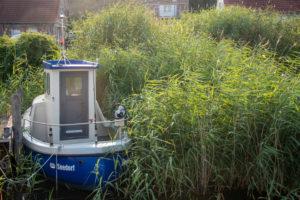 Germany, Mecklenburg-Western Pomerania, Seedorf, an old fishing boat anchors hidden in the reeds, Baltic Sea, Ruegen island