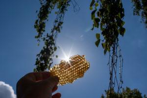 Honeycomb, beeswax, back light, sun star