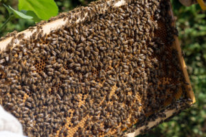 Beehive, honeycombs, honeybees