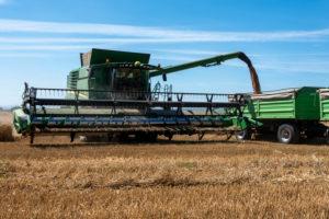 Combine harvester during the grain harvest