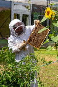 Imker kontrolliert Bienenstock