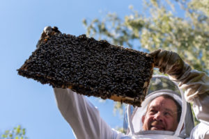 Beekeeper controls beehive