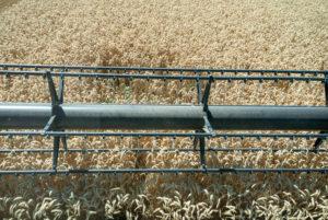 Reel, combine, winter wheat