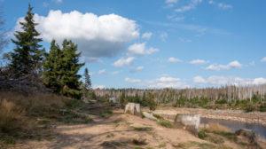Germany, Lower Saxony, Upper Harz, Harz, Harz National Park, Oderteich dam, tree stumps, forest