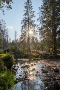 Germany, Lower Saxony, Upper Harz, Harz, Harz National Park, forest at the Oderteich dam, glaring sunlight