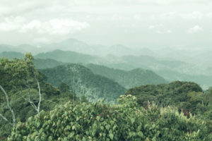 Panoramic view of a dense forest landscape in Malaysia
