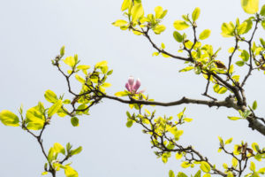 A bud on a blossoming tree