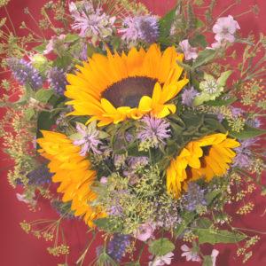 Blumenstrauß mit Sonnenblumen, Hintergrund in Bordeauxrot