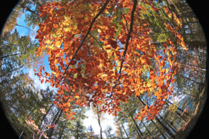 Forest motif, photographed with fisheye lens
