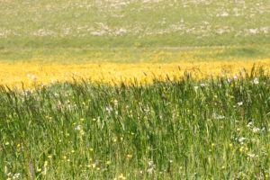 Summery meadow in yellow