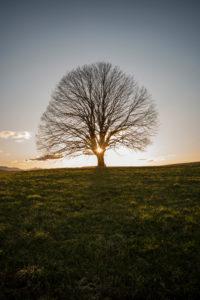 Sonnenuntergang hinter einzelnen Baum
