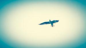 eine Möwe, in der Luft fliegend, Chromfarben