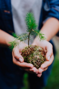 Female hand holding sprout wilde pine tree in front in nature green forest. Earth Day save environment concept. Growing seedling forester planting.