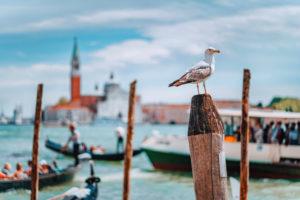 Venice, Italy. Seagull on pole against blurred panorama view of Chiesa di San Giorgio Maggiore or San Giorgio Maggiore island.