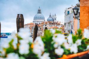 Canal Grande with Venice gondola and Basilica di Santa Maria della Salute in Venice, Italy. Spring defocused flower in foreground.