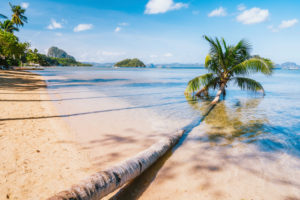 Fallen palm tree on sandy corong beach, El Nido, Palawan, Philippines.