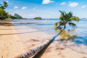 Fallen palm tree on sandy corong beach, El Nido, Palawan, Philippines.