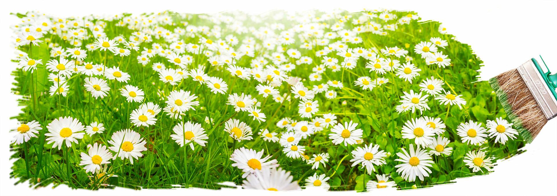 Symbol Frühjahrsputz