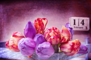 February 14th, pink and purple tulips for Valentine's Day