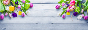Easter background, spring flowers and easter eggs on wood, banner