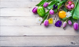 Easter background, spring flowers and easter eggs on wood