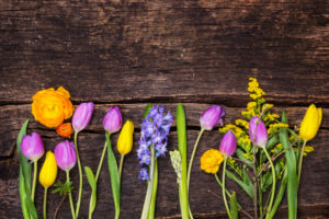 Colorful spring flowers on wood